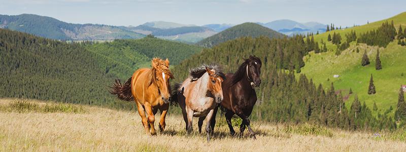 Dude Ranch for Families Colorado
