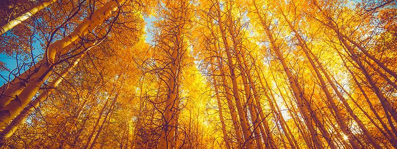 Colorado Fall Foliage