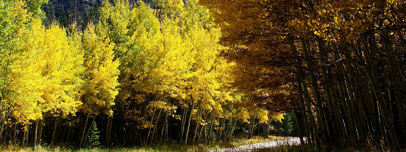 Leaves Change Colorado Fall