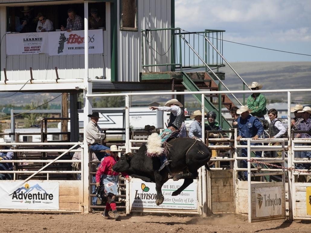Bull Riding History