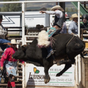 A History of Bull Riding