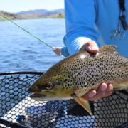 Best Fishing Near Denver