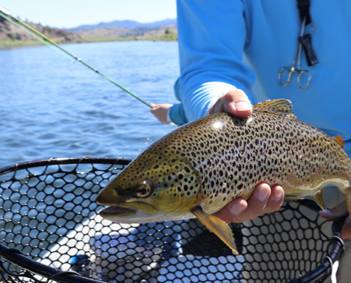 Best Fishing Near Denver