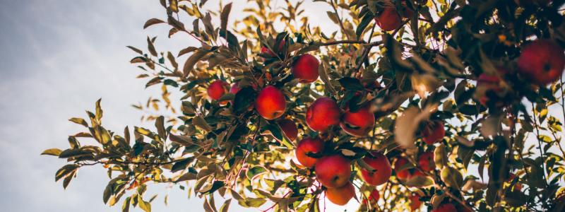 fruit farms in colorado