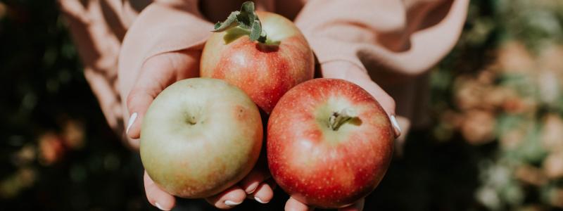 yaya farm and orchard